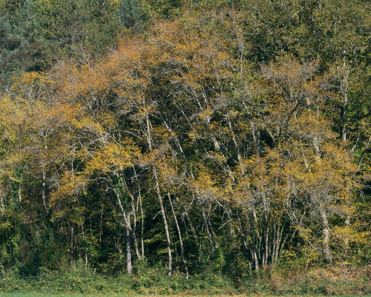 Forêt du Périgord, prise de vue 17/10/2017. Provia 100F 4x5, objectif Nikkor-M 300mm, 1/8s @ f/32.
