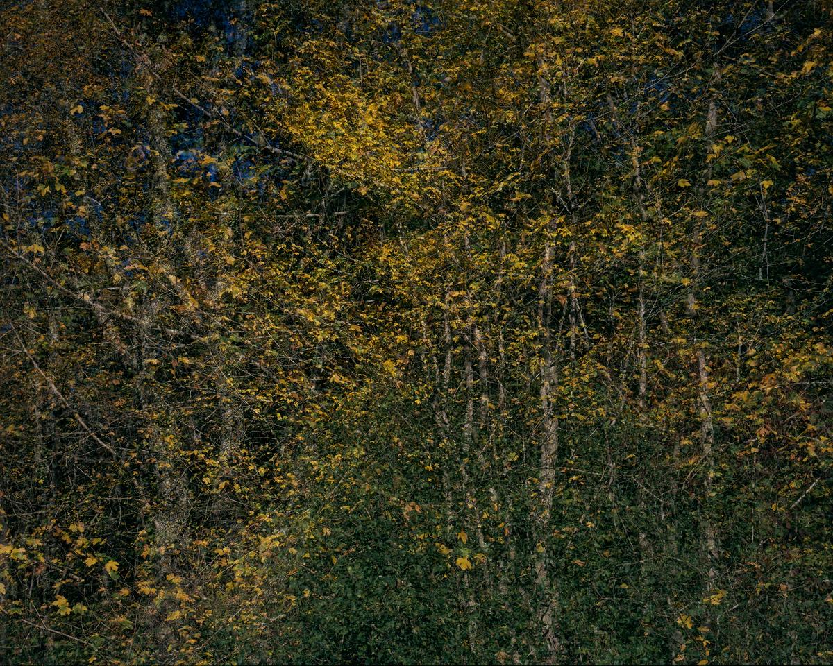 Forêt du Périgord, 17/10/2017. Provia 100F 4x5, objectifs Nikkor-M 300mm (1/60s @f/32), APO-Symmar 150mm (1/250s @ f/16), Super Symmar 110 XL (1/250s @ f/16).
