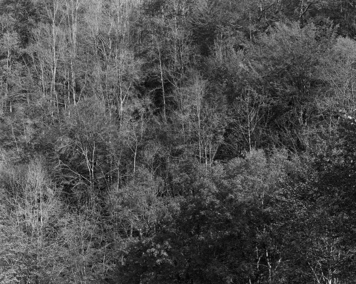 Route de Larrau, octobre 2017. Ilford Delta 100 4x5, Nikkor-M 300mm, f/32 1/4 sec