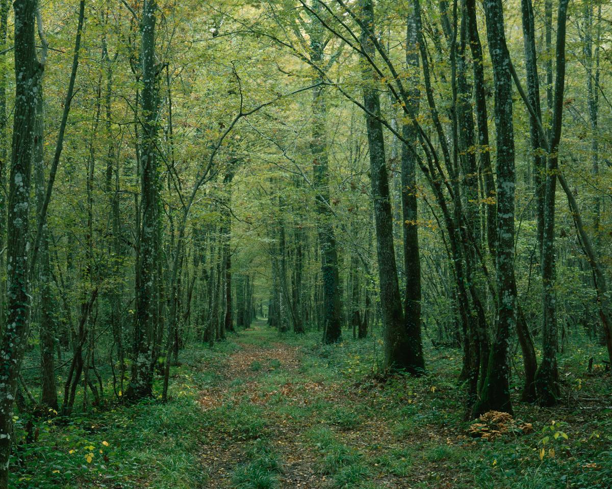 Prise de vue 20/10/2015. Provia100F, 15s @ f/64. Chemin forestier, Aube.